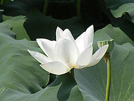 Yoshihiro Kawasaki © Lotus